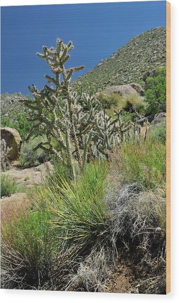 Greening Of The High Desert Wood Print