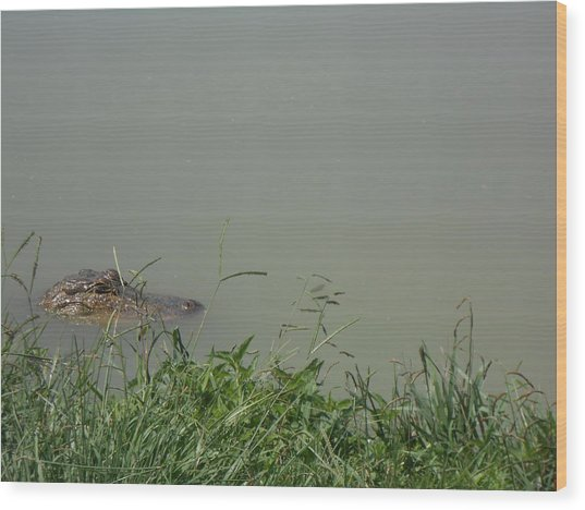 Greenwood Gator Farm Wood Print
