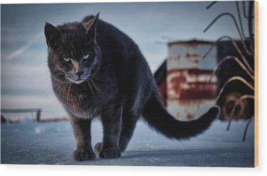 Grey Cat, Grey Mood Wood Print