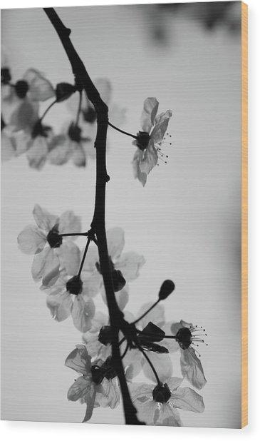 Grey Wood Print by Daniel Lih