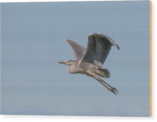 Grey Heron Wood Print