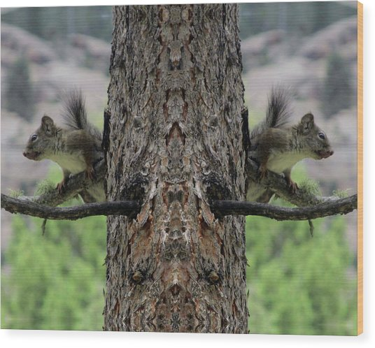 Grey Squirrels On The Look Out Wood Print