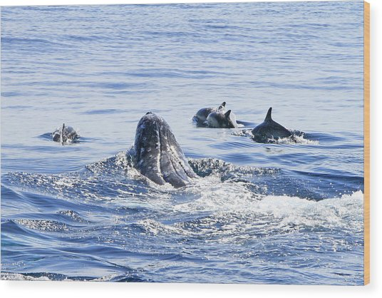 Grey Whale 1 Wood Print