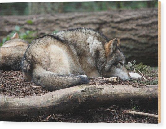 Grey Wolf - 0011 Wood Print