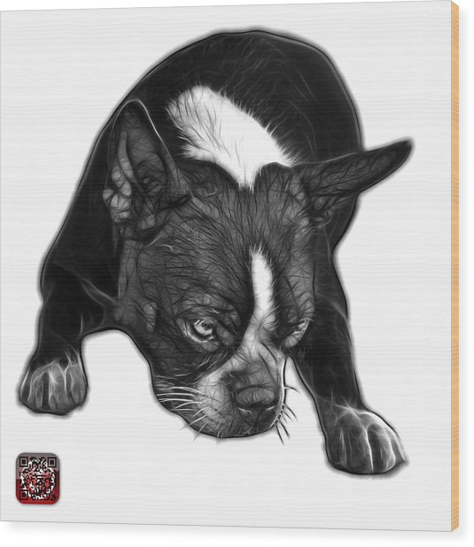 Greyscale Boston Terrier Art - 8384 - Wb Wood Print