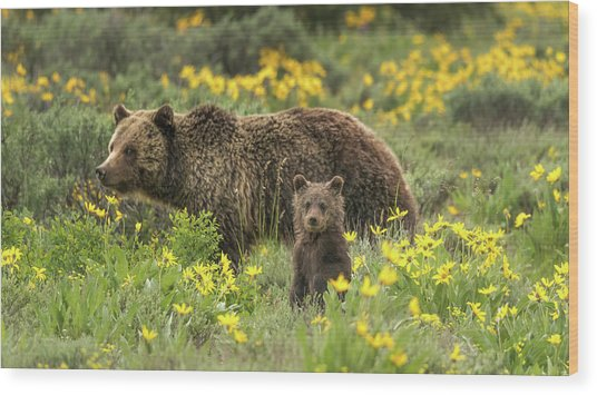 Grizzlies In The Wildflowers Wood Print