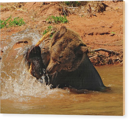 Grizzly At Play Wood Print by Dennis Hammer