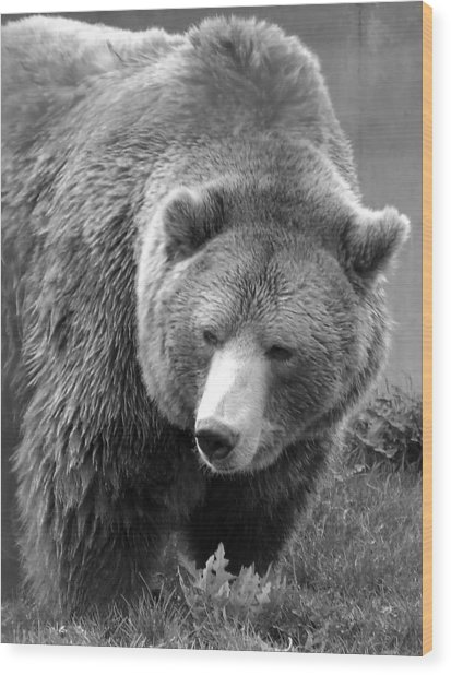 Grizzly Bear And Black And White Wood Print by Tiffany Vest