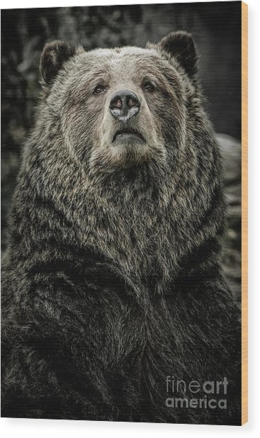Wood Print featuring the photograph Grizzly Bear by Brad Allen Fine Art