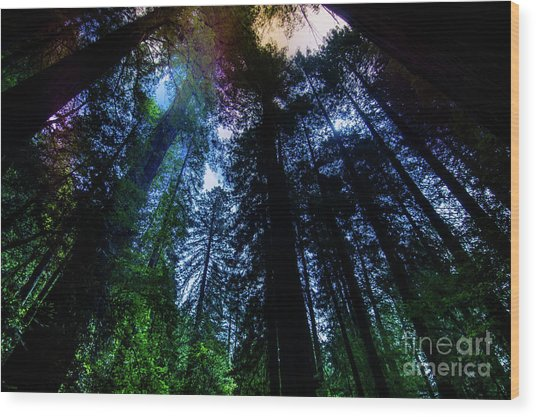 Grizzly Creek Redwood Grove Wood Print by Blake Webster