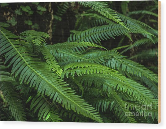 Grizzly Creek Redwoods Ferns Wood Print by Blake Webster