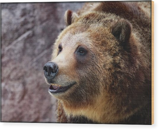 Grizzly Smile Wood Print
