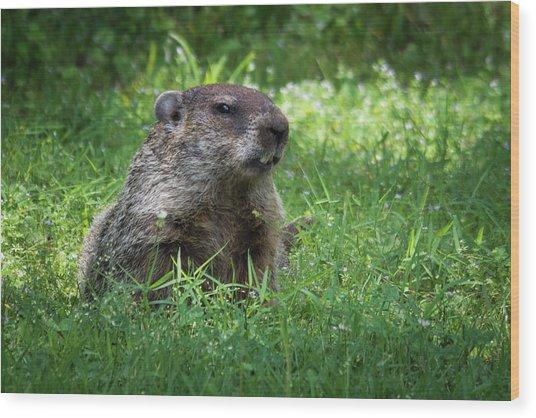 Groundhog Posing  Wood Print