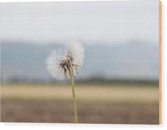 Groundsel In The Wind Wood Print
