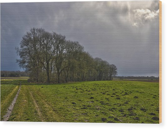 Group Of Trees Against A Dark Sky Wood Print