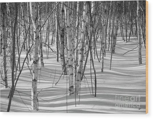 Group Of White Birches Wood Print