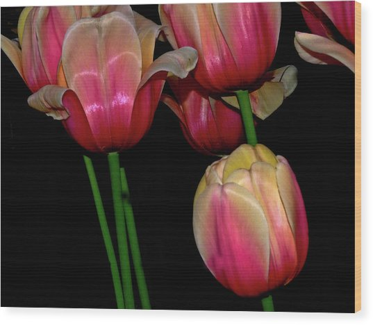 Grouping Ofpink And Yellow Tulips Wood Print