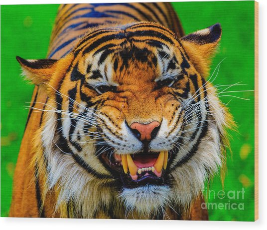 Growling Tiger Wood Print
