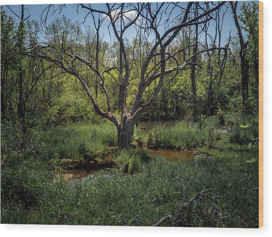 Growning From The Marsh Wood Print