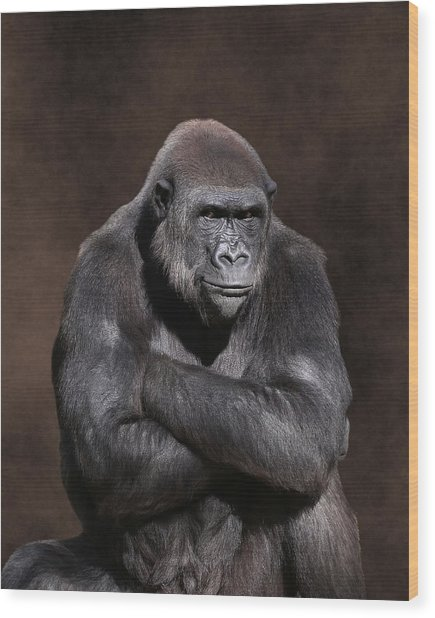 Grumpy Gorilla Wood Print