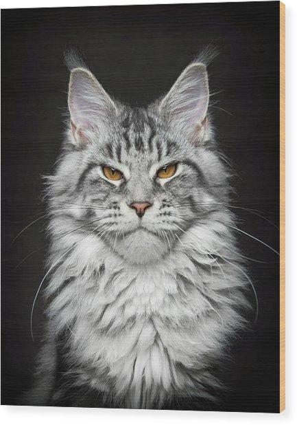 Wood Print featuring the photograph Grumpy Silver. by Robert Sijka