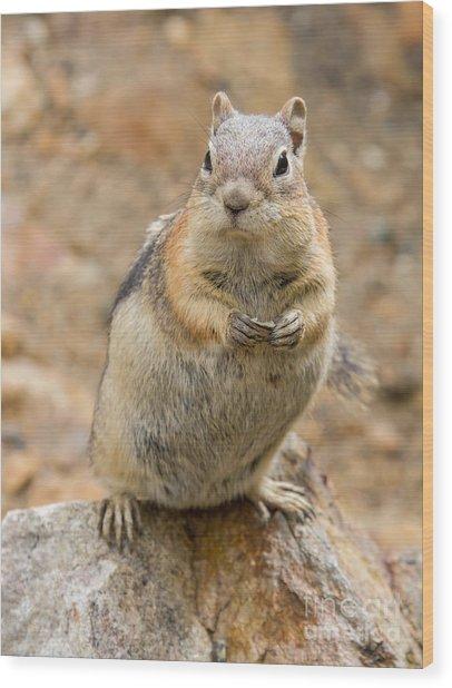 Grumpy Squirrel Wood Print