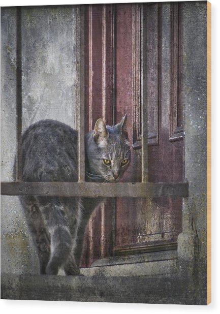 Grunge Cat Wood Print
