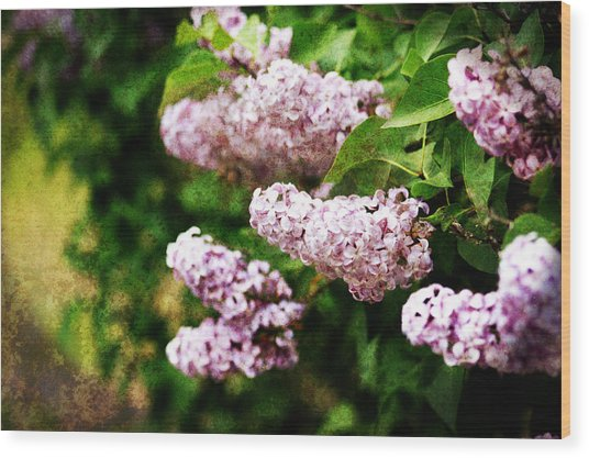 Wood Print featuring the photograph Grunge Lilacs by Antonio Romero