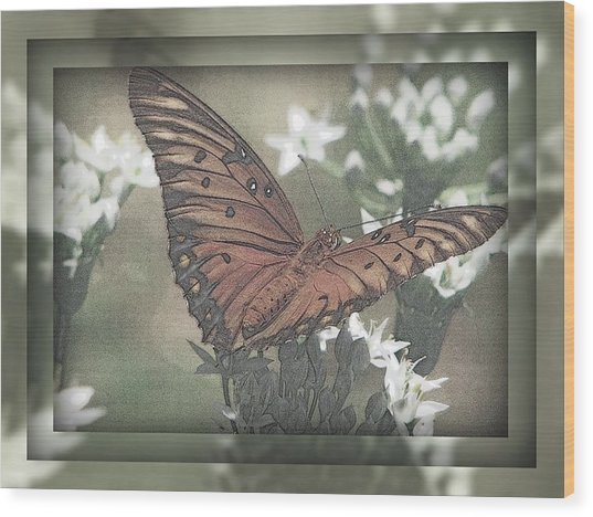 Gulf Fritillary Behind The Screen Wood Print by Dottie Dees