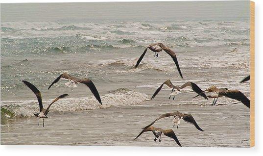 Gulf Gulls Wood Print