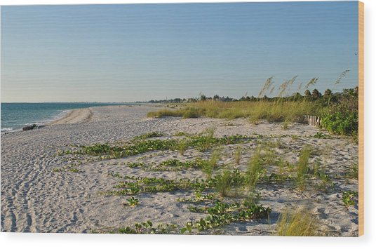 Gulf Of Mexico Beach Wood Print by Steven Scott