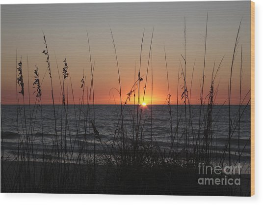 Gulf Sunset In Florida Wood Print