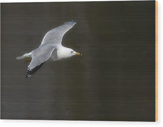 Gull - Goeland Wood Print