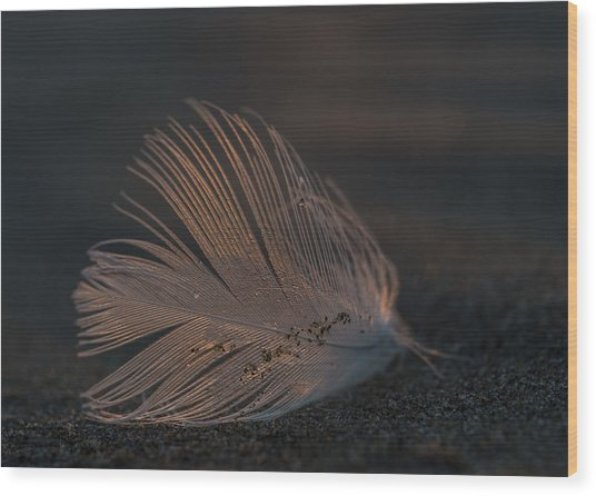 Gull Feather On A Beach Wood Print