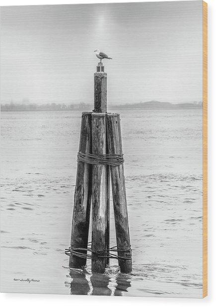 Gull In New York Harbor Wood Print