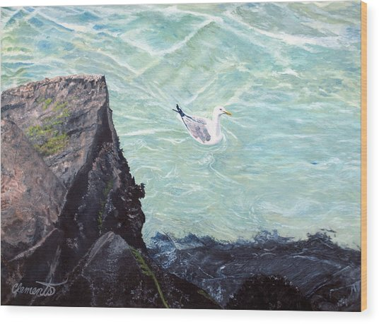 Gull In Shallows Of Barnegat Inlet Wood Print