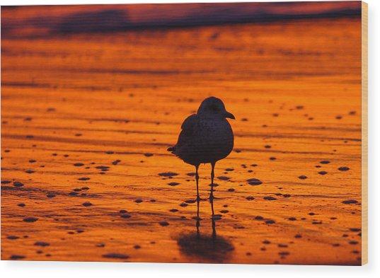 Gull Caught At Sunrise Wood Print