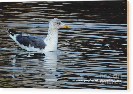 Gull On Winter's Pond  Wood Print
