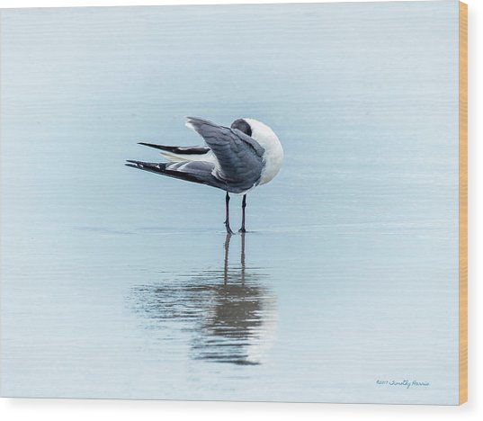Gull Reflection Wood Print