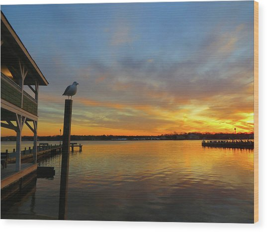 Gull Sunset Wood Print