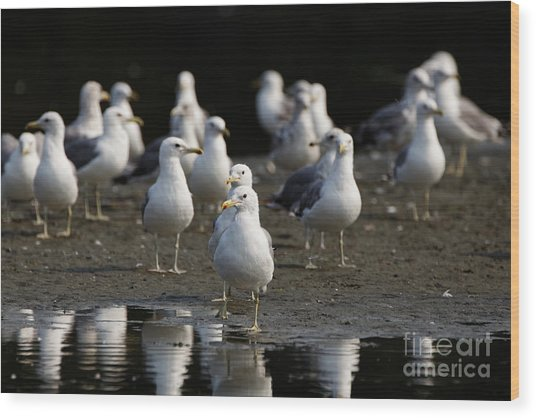 Gulls At The Beach Wood Print