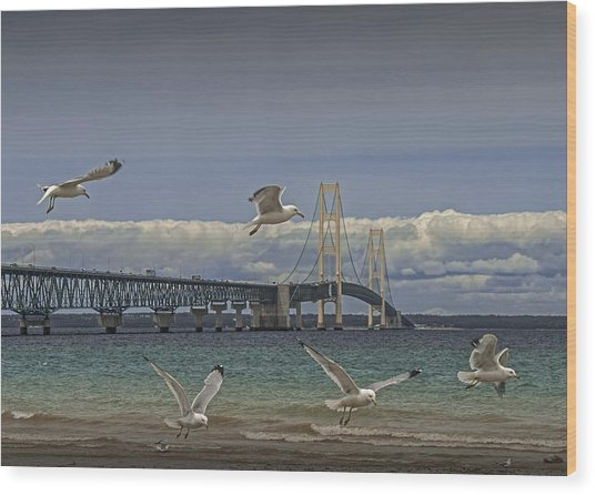 Gulls Flying By The Bridge At The Straits Of Mackinac Wood Print