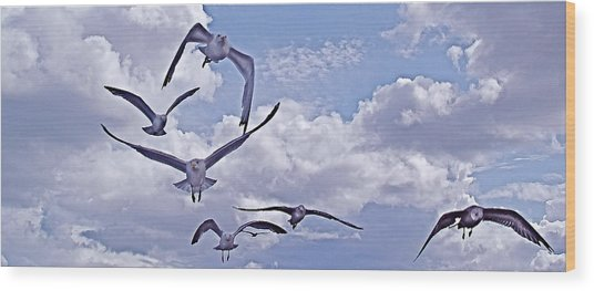 Gulls Will Be Gulls Wood Print by Mike Shepley DA Edin