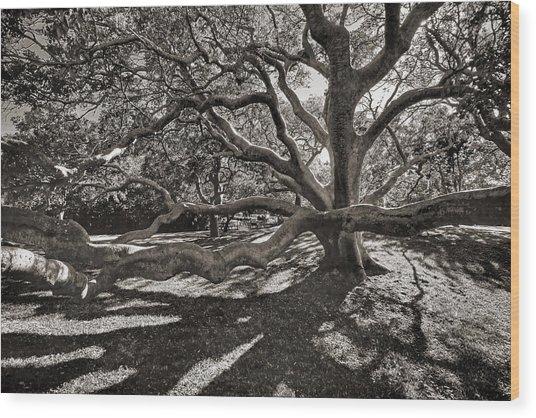 Gumbo Limbo Wood Print