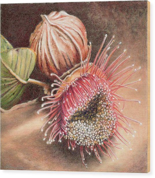 Gumnut And Flower Wood Print by Robynne Hardison