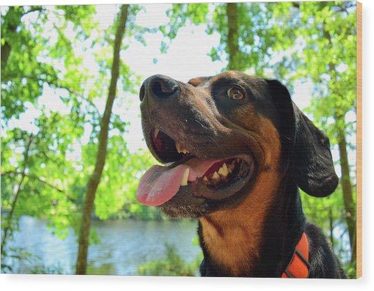 Gus On A Hike Wood Print