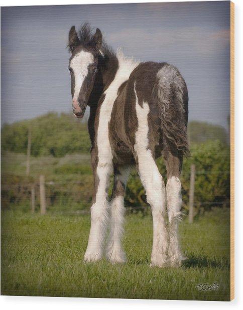 Gypsy Horse Foal Wood Print by Elizabeth Sescilla
