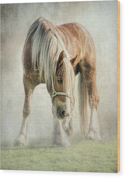 Gypsy In Morning Mist. Wood Print