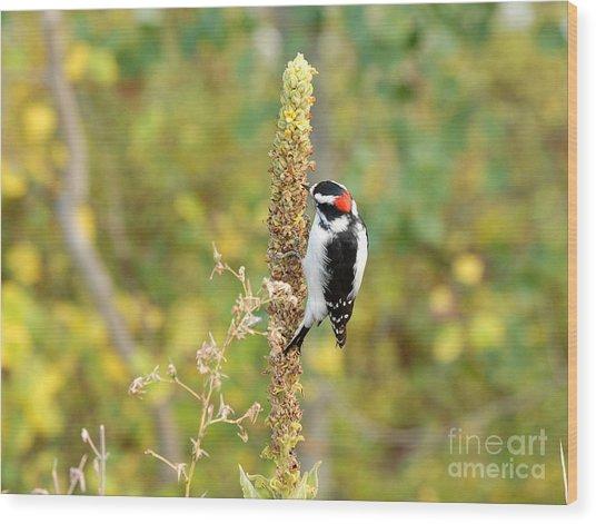 Hairy Woodpecker Wood Print by Dennis Hammer