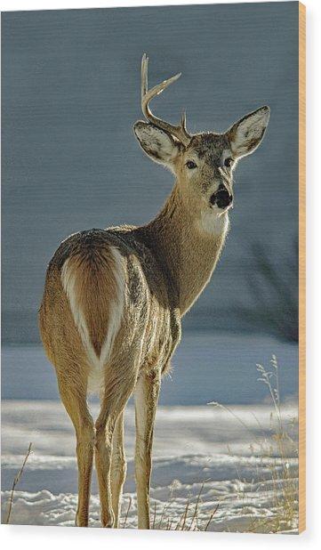 Half A Buck Wood Print